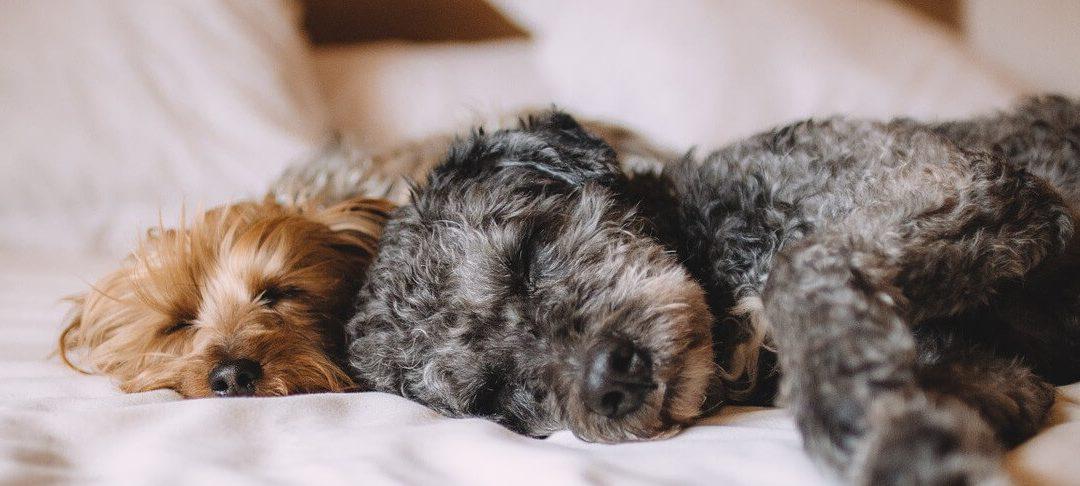 ¿Cuáles son los beneficios de aceptar mascotas en tus propiedades de alquiler?