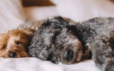Accepter les animaux : un atout pour votre entreprise de location de vacances